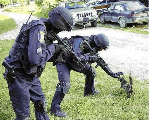 Owned Cat Swat